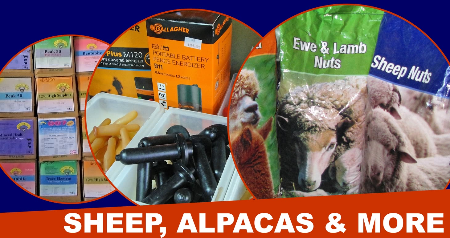 Sheep, Alpaca and more products.