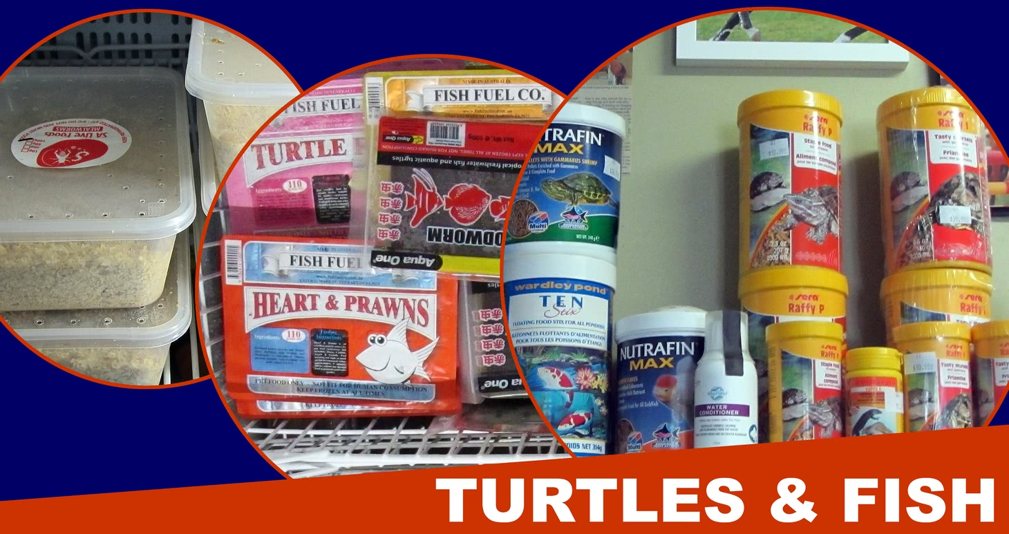 Turtles and fish products.